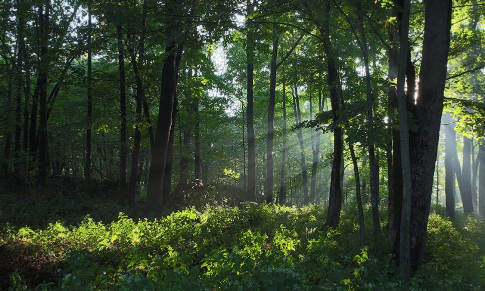 Federal Forest Legacy Funding Allocated to Upper Delaware Region