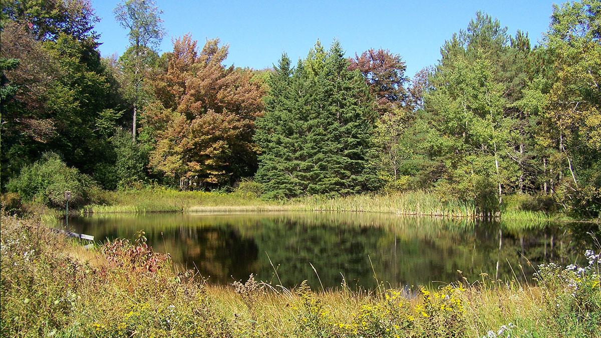 Holbert Creek