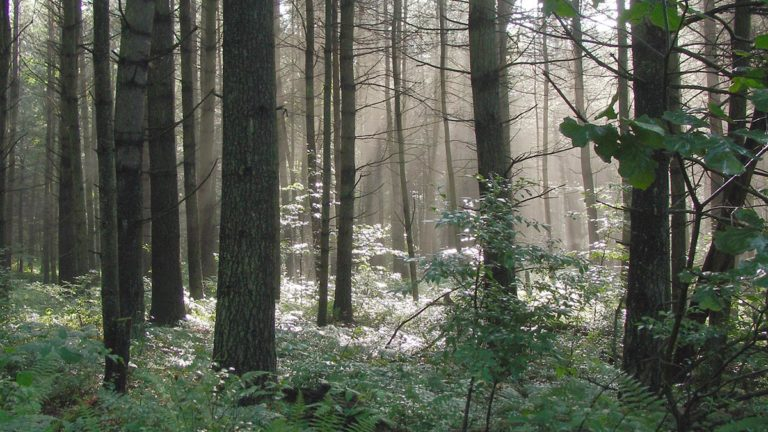 Scenic forest image.