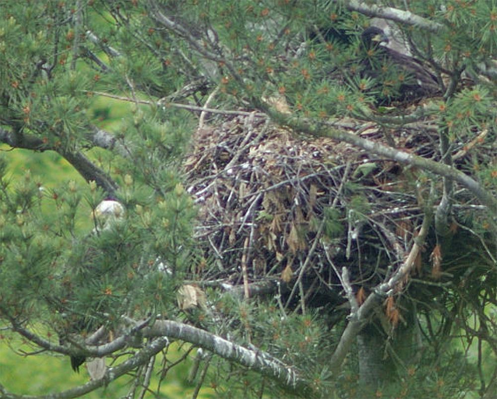 Nest of three