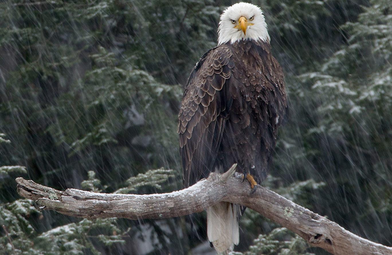 Eagle Photo Workshop Bus Tour  *WAIT LIST ONLY*