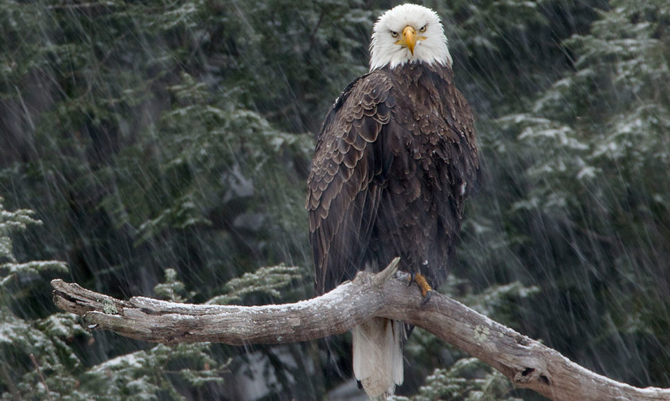 PHOTO CONTEST | Sharing Place: Eagles and Their Environs