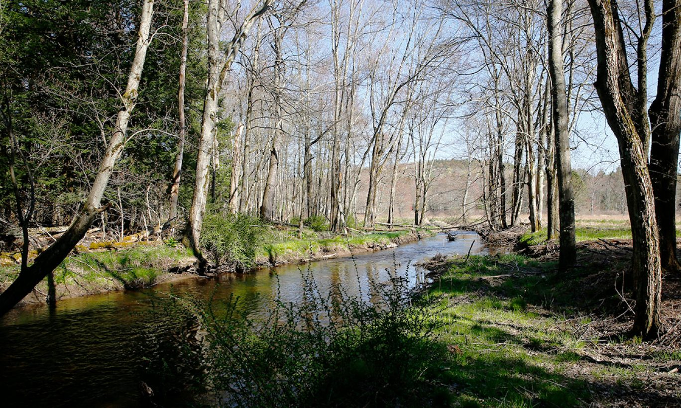 Clean Water Protected Forever: The Forest Reserve in Smallwood
