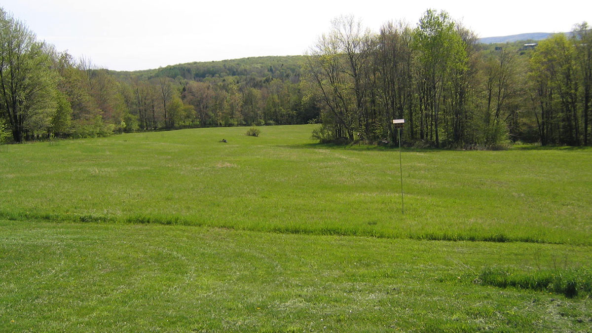 South Canaan Meadow
