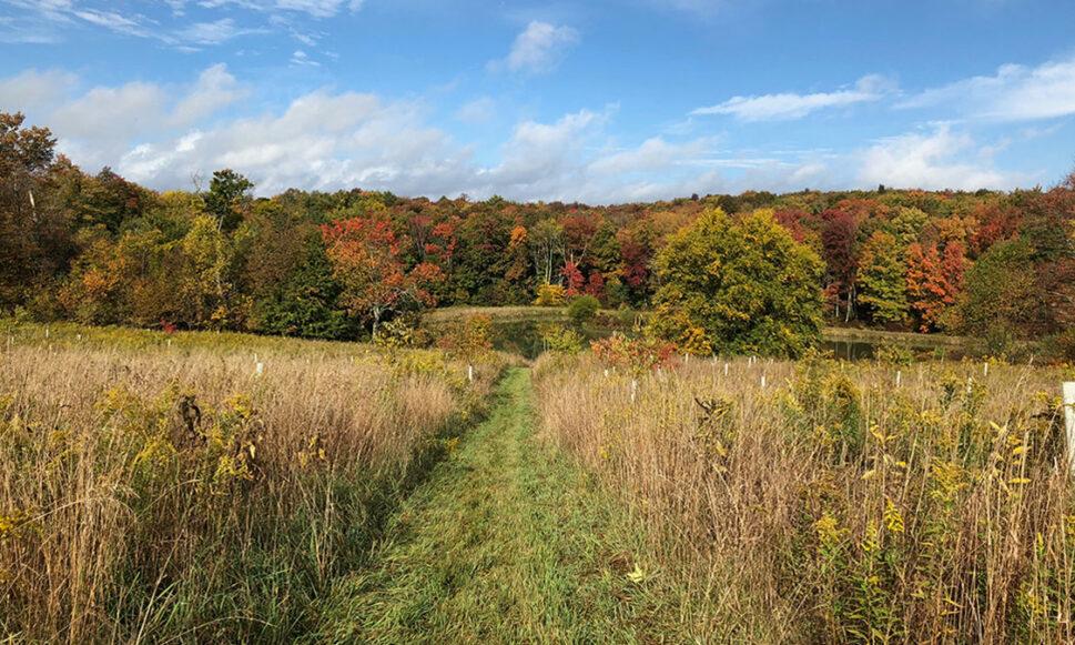 Walk in Penn's Woods
