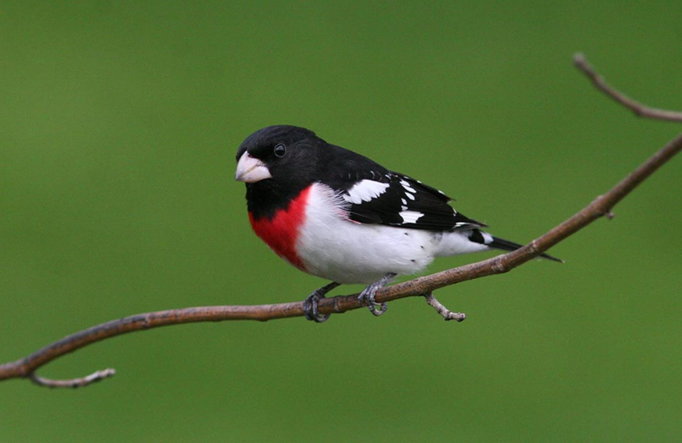 Birding Walk