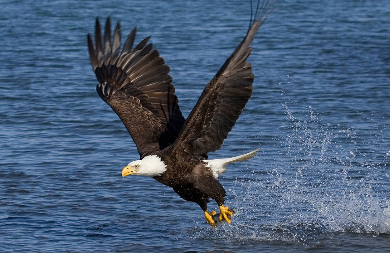 Eagle Watch Bus Tour *WAIT LIST ONLY* - Delaware Highlands Conservancy