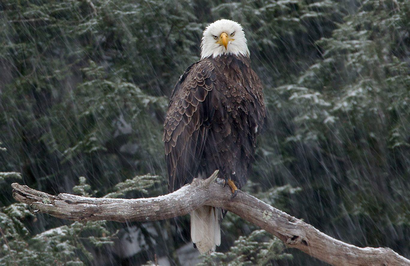 Eagle Watch Bus Tour *Wait List Only*