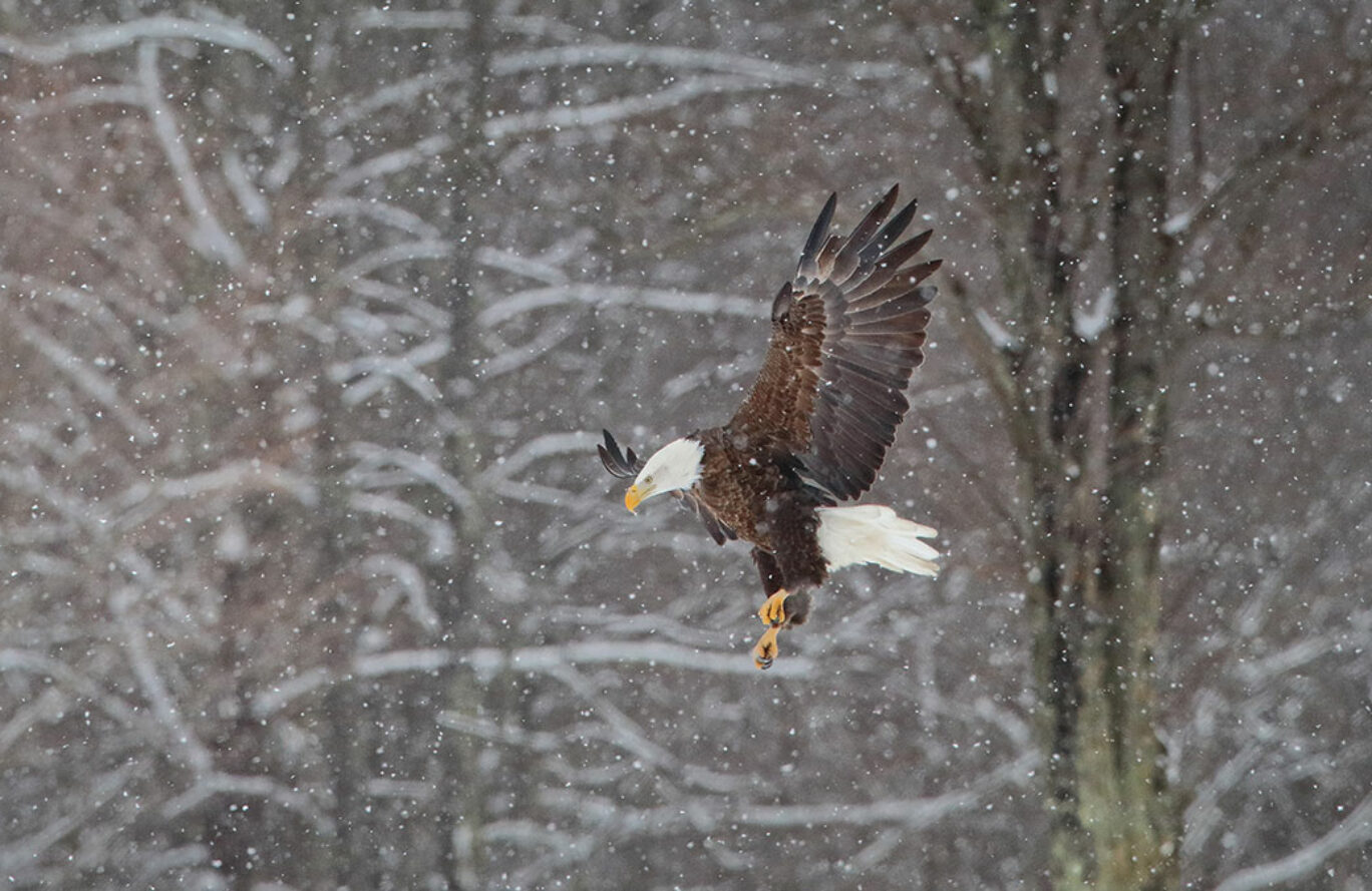 Winter 2021 Eagle Watch
