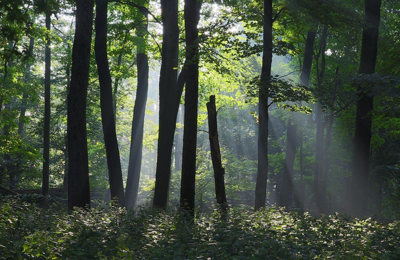 Forestry Walk at Lemons Brook Farm
