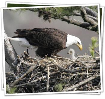 nest adult baby