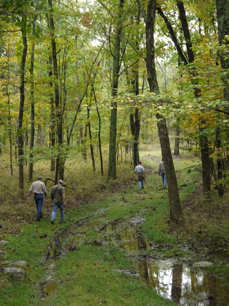 pmwog forest walk