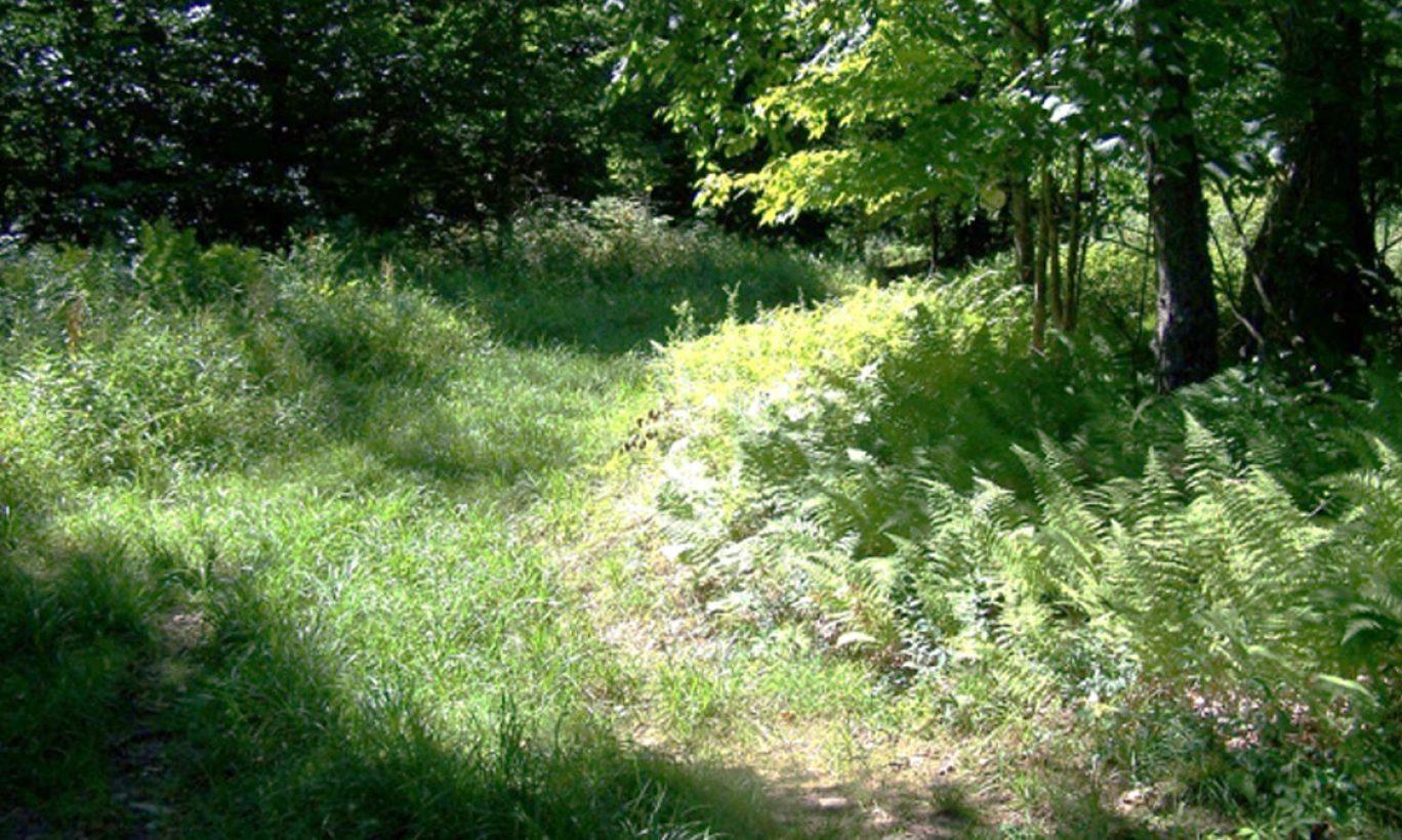 Wayne County's Spruce Lake Farm Protected